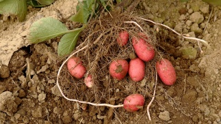 Understanding crop health